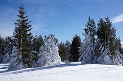 Пуща снежка Стоковые Фотографии RF