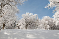 пуща снежная Стоковое Фото
