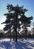 пуща снежная Стоковые Фото
