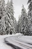 пуща снежная Стоковая Фотография