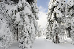пуща снежная Стоковое фото RF