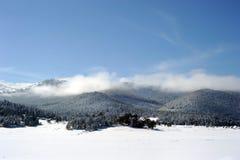 пуща снежная Стоковые Фотографии RF