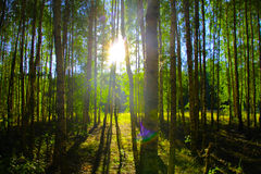 пуща солнечная Стоковое фото RF