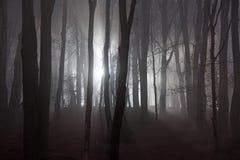 пуща страшная Стоковые Фото
