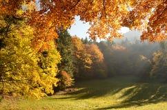 Пуща с лучем солнца в осени Стоковое Изображение RF