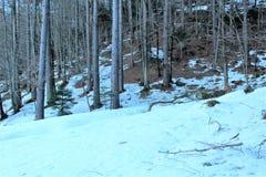 пуща с снежком Стоковая Фотография