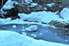 пуща с снежком Стоковые Фото