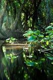 пуща тропическая Стоковые Изображения RF