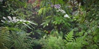 пуща тропическая Стоковое Фото