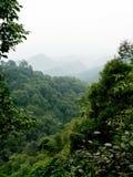 пуща тропическая Стоковые Изображения