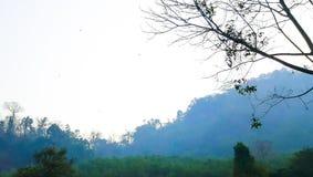пуща тропическая Стоковое Изображение