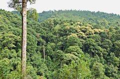 пуща тропическая Стоковое фото RF