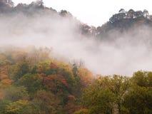 Пуща тумана осени, провинция gansu, Китай Стоковые Изображения RF