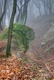 пуща тумана Стоковое фото RF