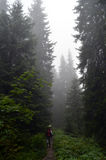 пуща тумана Стоковое Изображение RF