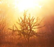 пуща туманная Стоковые Фотографии RF