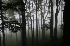 пуща туманная Стоковое Изображение RF