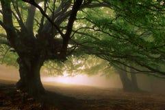 пуща туманная Стоковое Фото