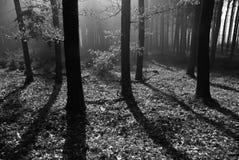 пуща туманная Стоковое фото RF