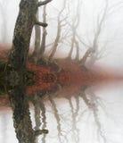 пуща туманная Стоковые Изображения
