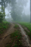 пуща туманная Стоковые Фото