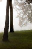 пуща туманная Стоковые Изображения RF