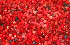 пуща ягод стоковые изображения