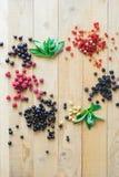 пуща ягод одичалая Стоковое Фото