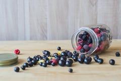 пуща ягод одичалая Стоковая Фотография RF
