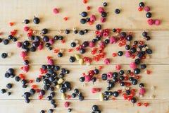 пуща ягод одичалая Стоковые Фотографии RF