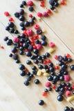 пуща ягод одичалая Стоковые Фото