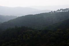 пуща Стоковые Фото
