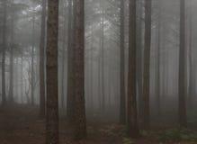 пуща Стоковая Фотография RF
