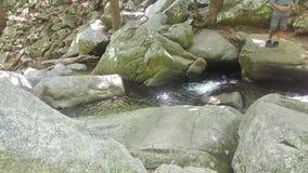 Пуща 48 Стоковое Изображение RF