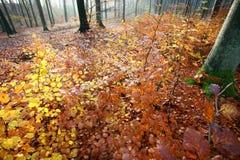 пуща colorul стоковое изображение