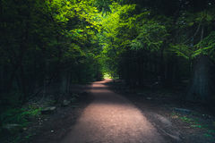 пуща hiking путь Стоковая Фотография RF