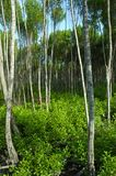 пуща ii тропическое стоковое изображение