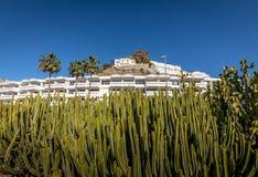 Пуэрто-Рико, Gran Canaria в Испании - 16-ое декабря 2017: Зеленые заводы кактуса перед гостиницой Portonovo в Puerto Стоковое фото RF
