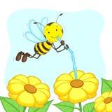 Пчела всасывая мед от цветка Стоковая Фотография