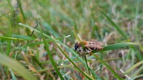 Пчела в траве стоковое изображение rf