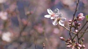 Пчела в цветке видеоматериал