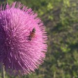 Пчела в цветке Стоковые Изображения RF