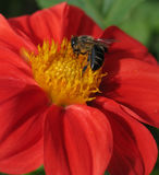 пчела деятельности стоковое фото