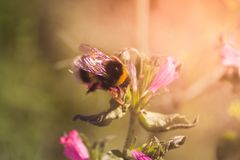 Пчела и цветки стоковая фотография rf
