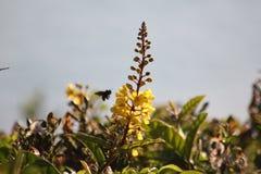 Пчела к цветню стоковое фото rf