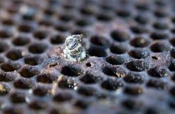 пчела мертвая Стоковое фото RF