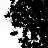 Пчела на крыле стоковые фотографии rf