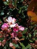 Пчела на милом цветке стоковые изображения rf