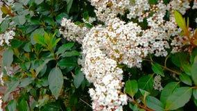 Пчела, оса, шершень на цветке, муха в замедленном движении, взгляде конца-вверх, для опыляет цветки, весну приходит, природа сток-видео