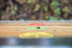 Пчела сидя на деревянном улье стоковая фотография rf